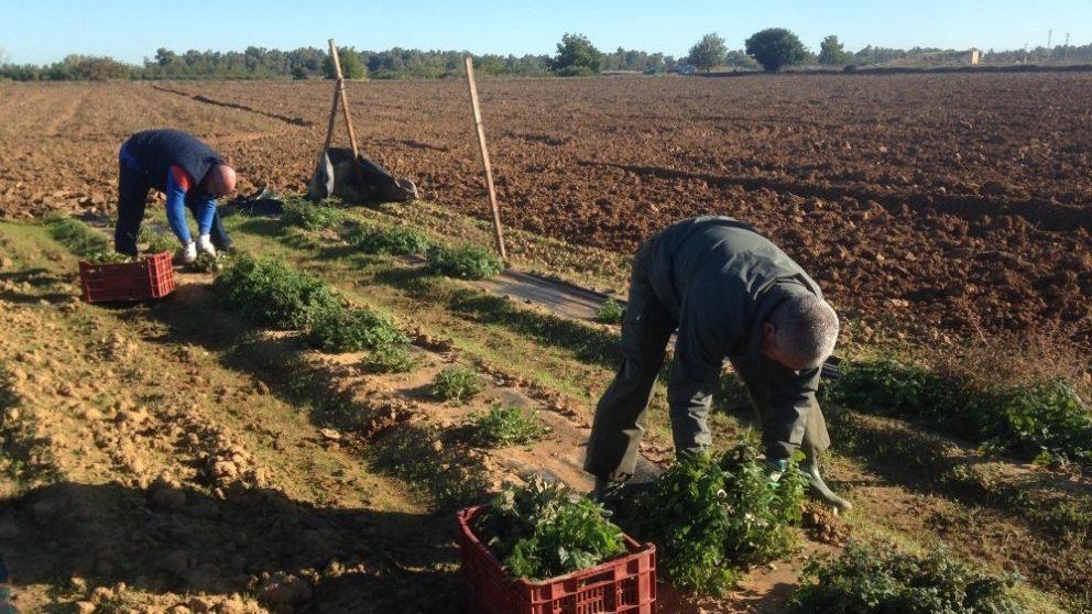 Agricultores trabajando en el campo (EUROPA PRESS).