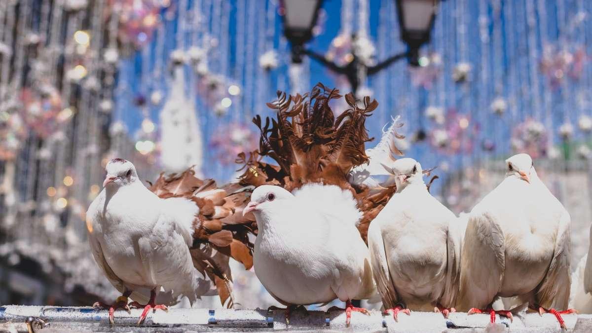 Las palomas son las aves urbanas más odiadas
