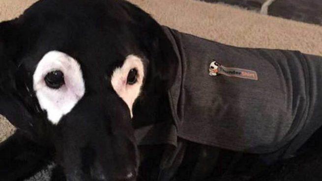 Vitíligo en perros