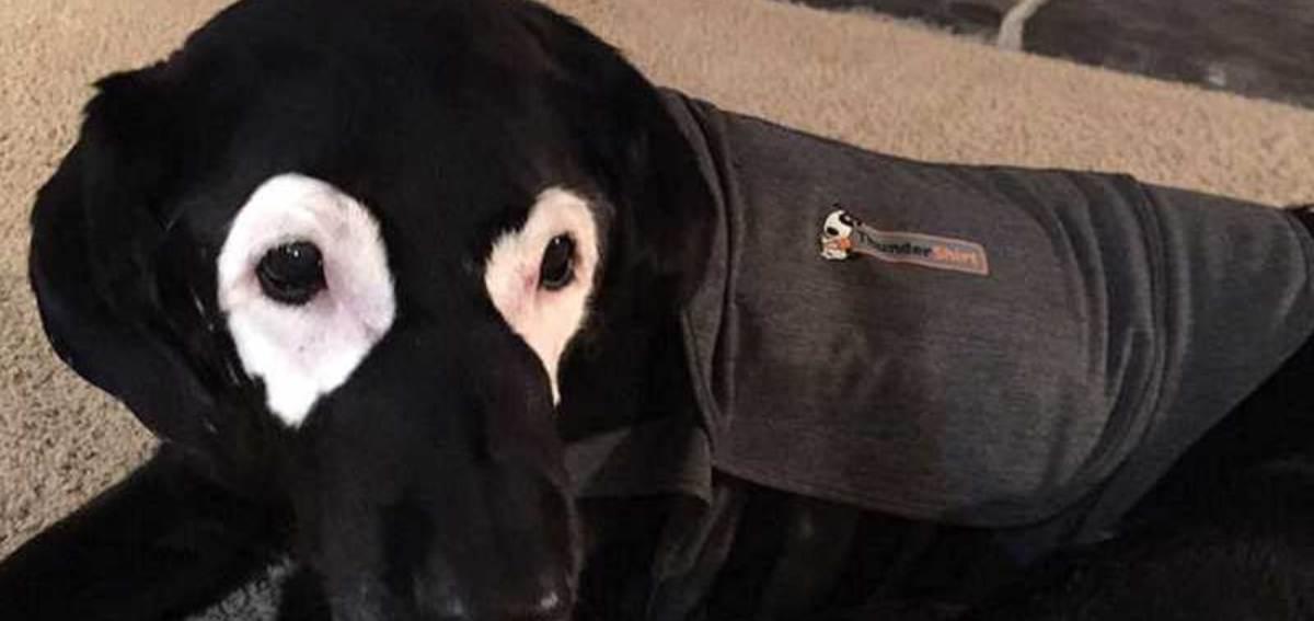 Curiosidades del vitíligo en perros