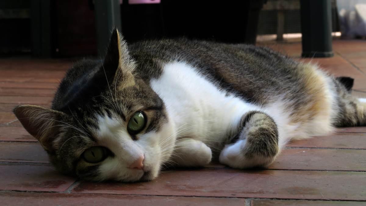 10 razones para tener un gato