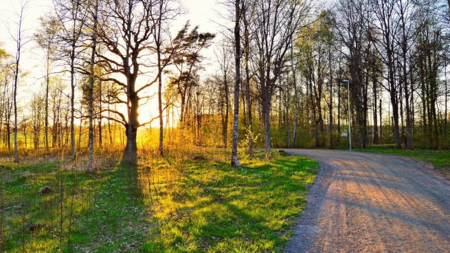 Astenia primavera