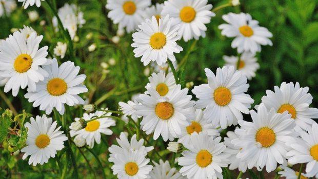 Flores de primavera