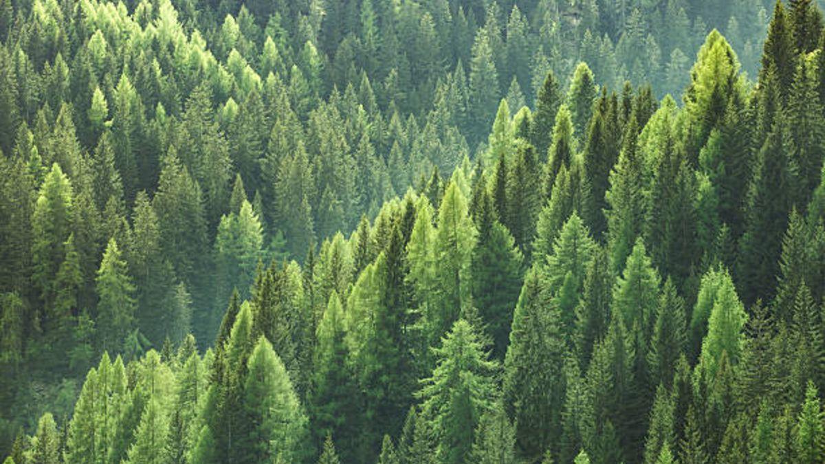 Cada 21 de marzo se celebra el Día Internacional de los Bosques