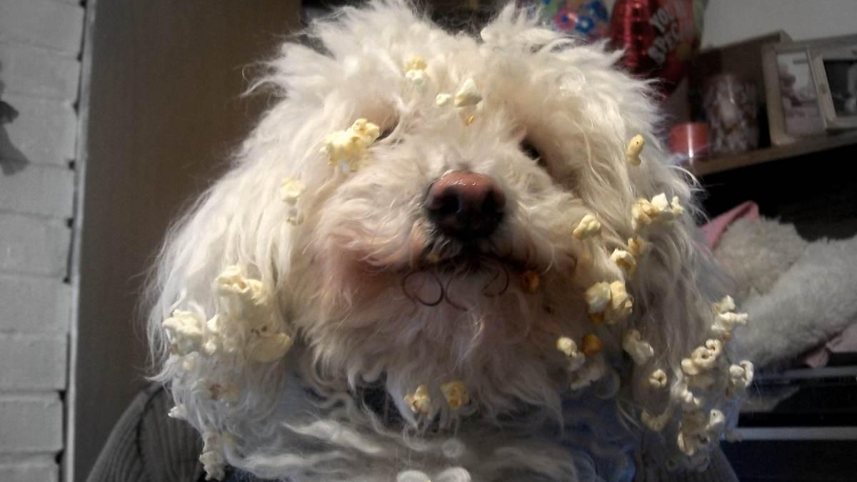 Palomitas de maíz a tu perro