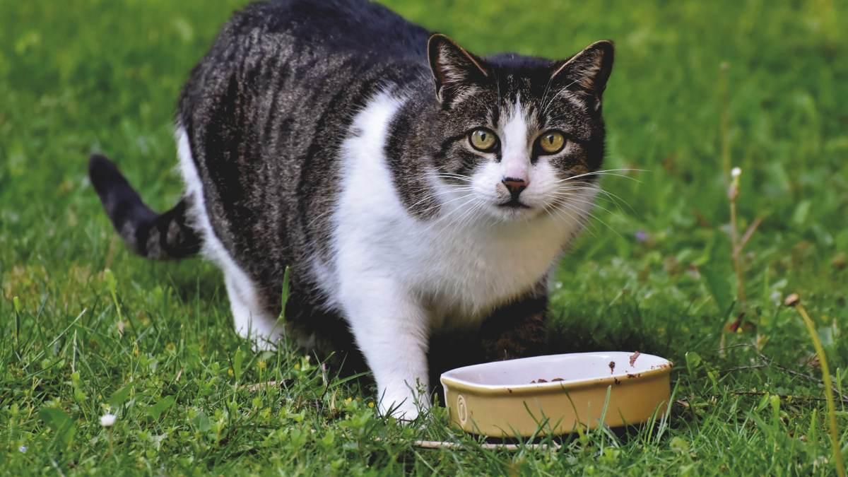 Alimentos no recomendables para gatos