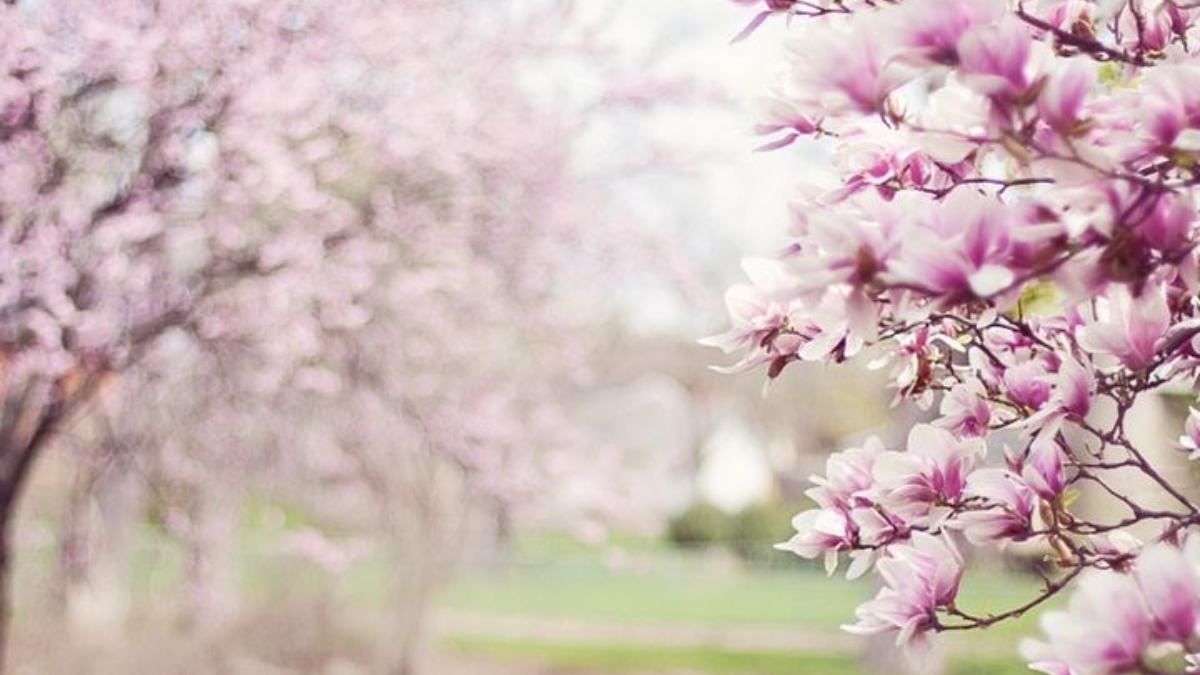 Las mejores frases sobre la primavera
