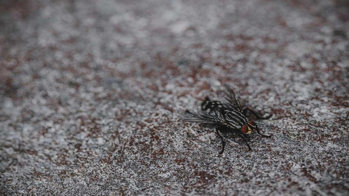 Las moscas son especialmente molestas cuando llega la primavera