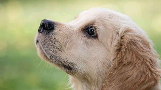 Investigadores detectan la variante británica del coronavirus en perros y gatos