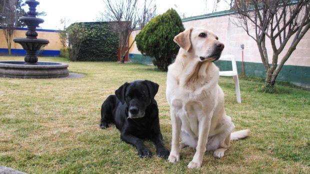 Perros sentados