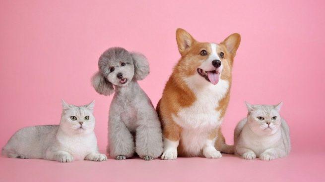 5 errores que cometemos los dueños de las mascotas y que debemos evitar