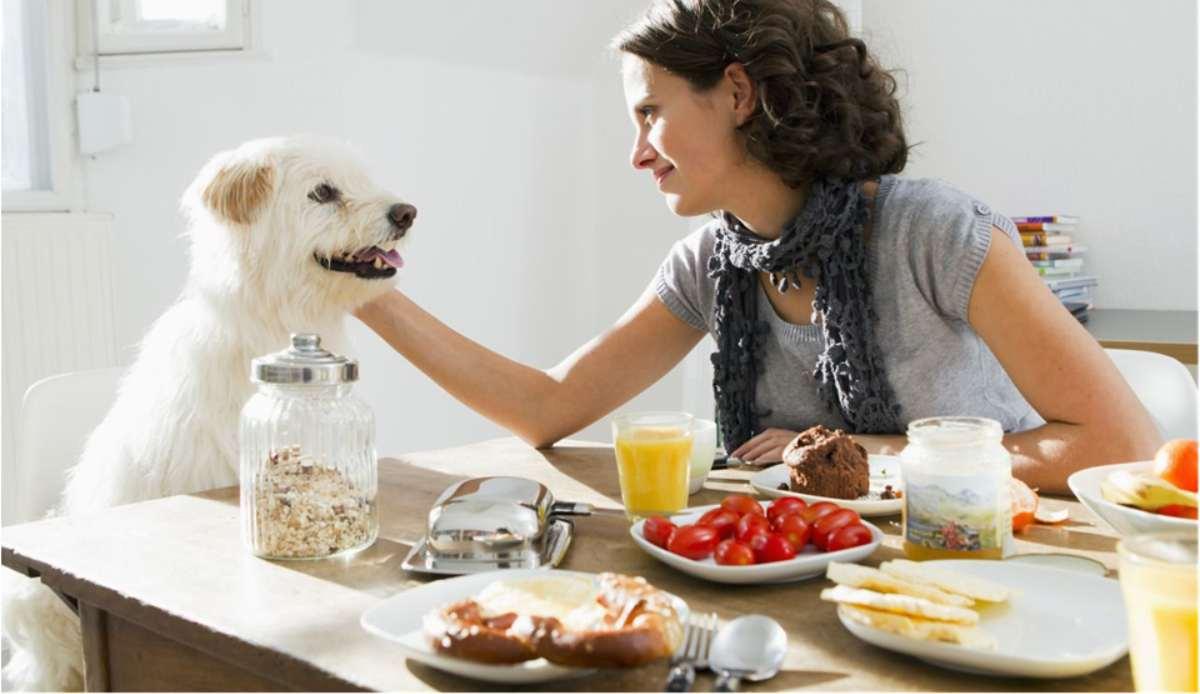 El tomate y tu perro