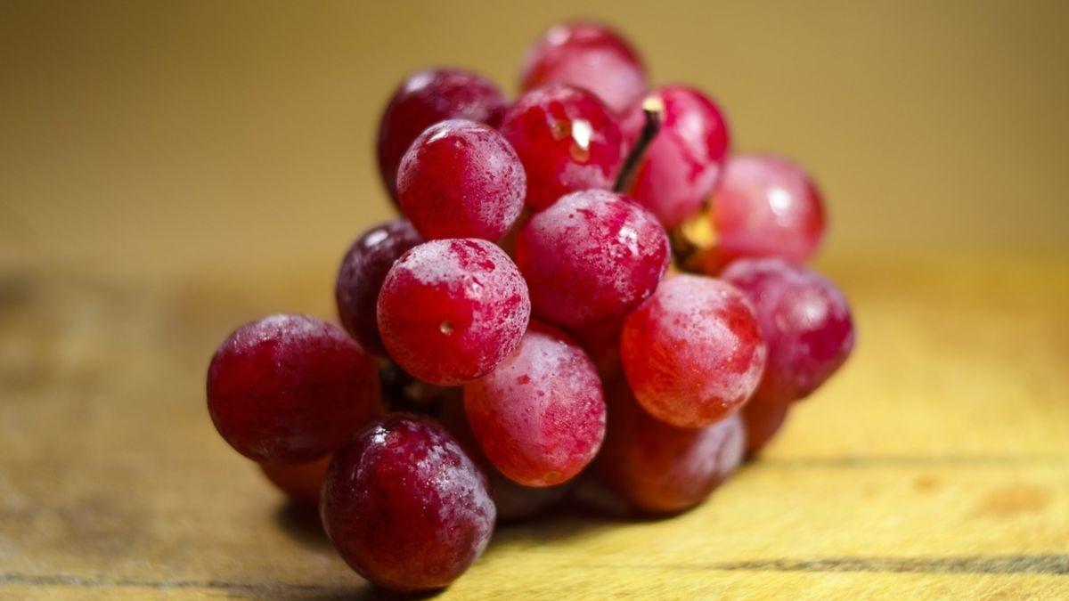 Los perros pueden comer uvas y pasas