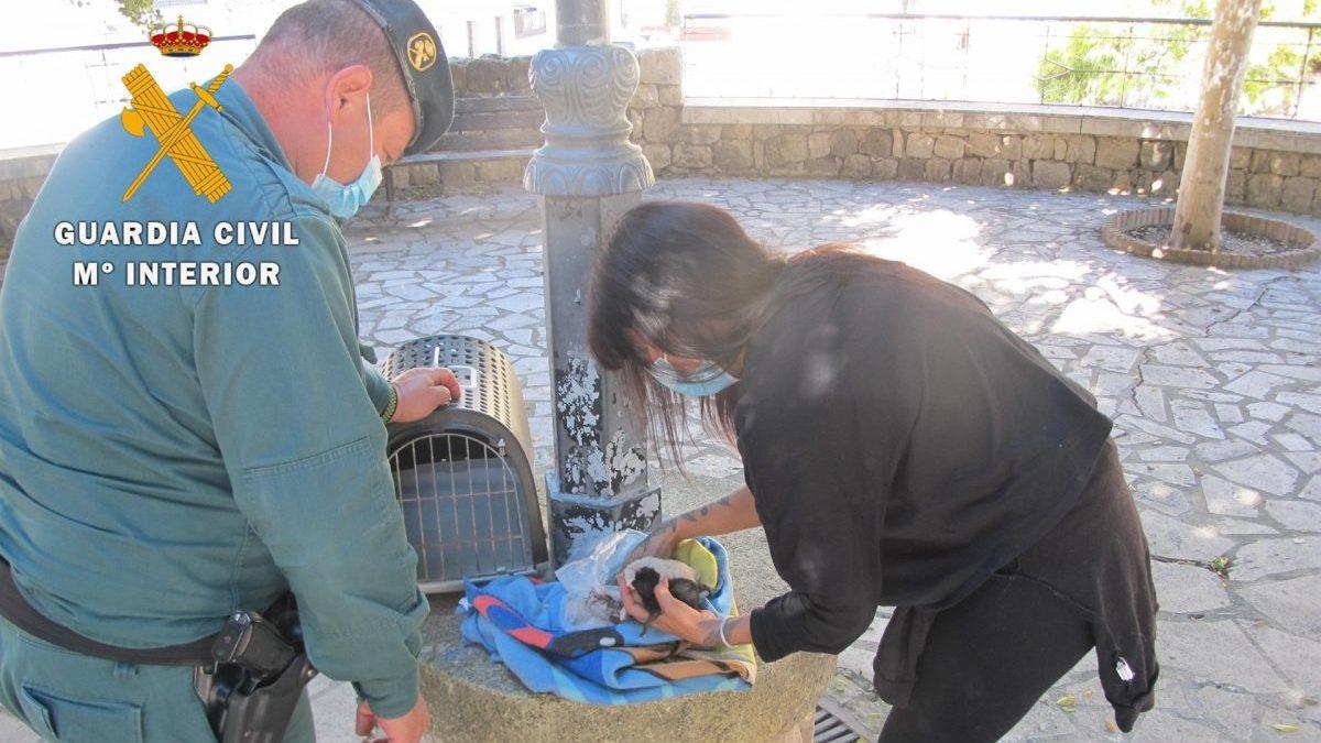 Una mujer arroja cinco gatos a un contenedor.