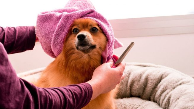 Conoces los íncreíbles beneficios del spa para perros