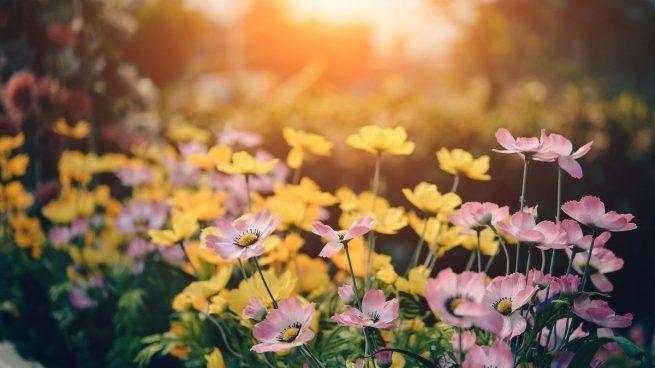 Plantas cultivar primavera