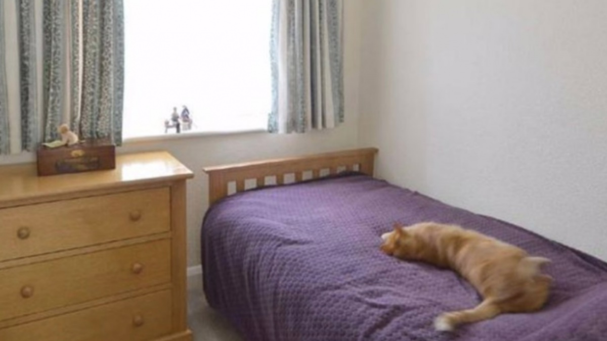 Gato con una doble vida