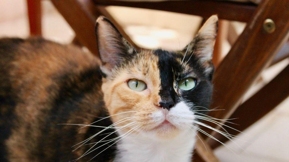 Tipos personalidad gatos