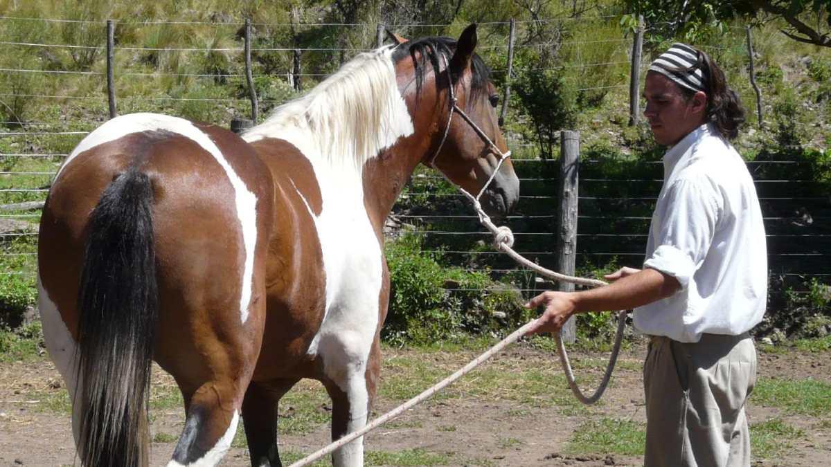 Consejos domar un caballo