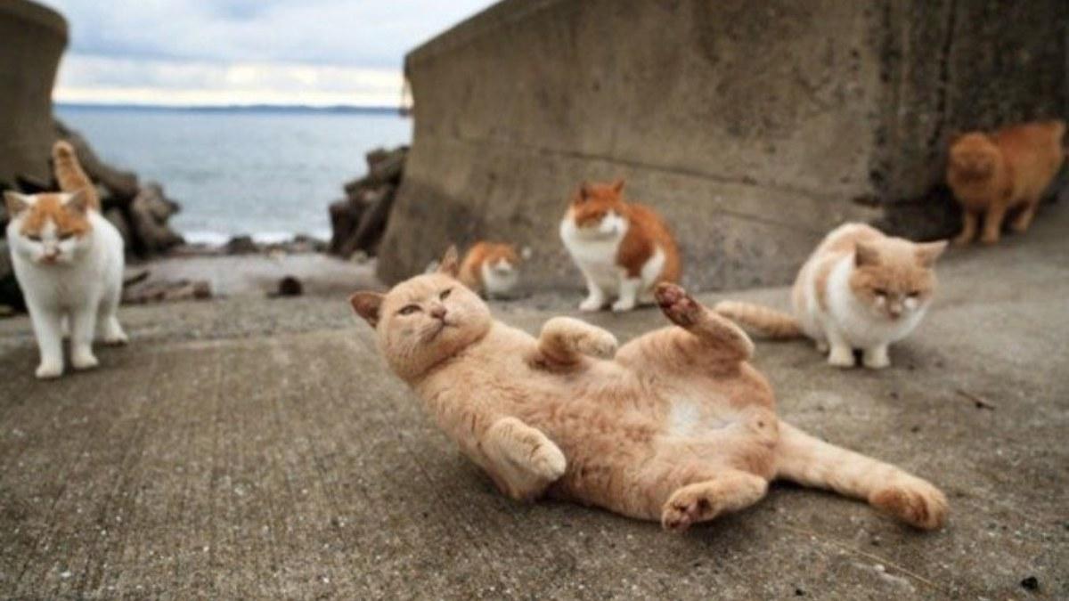 Aoshima es la 'Isla de los Gatos' de Japón