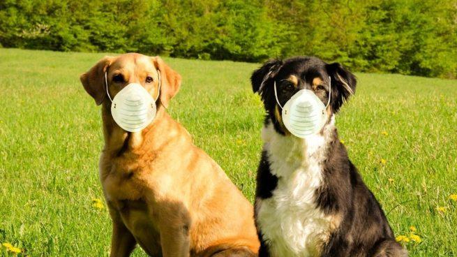 Rusia registra la primera vacuna contra el coronavirus para animales