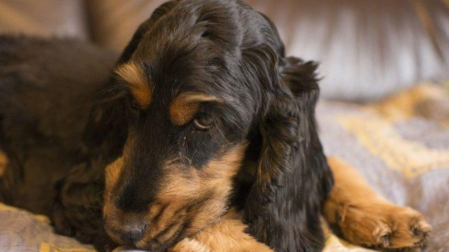 Mejores zonas perros coman duerman