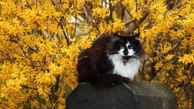 Gato en primavera