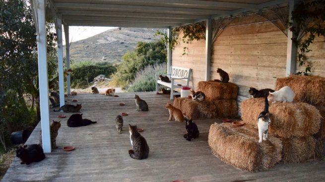 acariciador de gatos