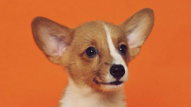 El vídeo del perro al que acaban de adoptar que arrasa en TikTok
