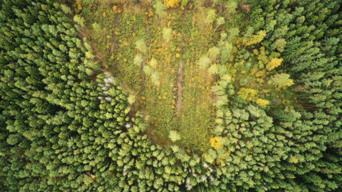 De qué modo la deforestación ha afectado a los bosques