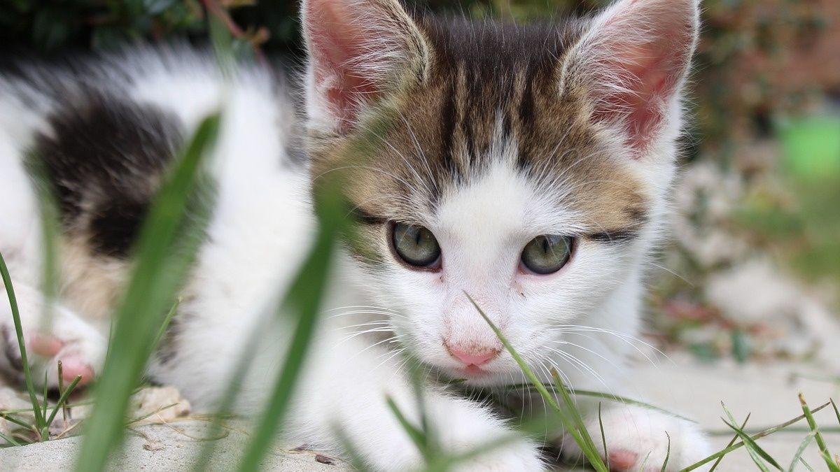 Cuidar gatos en una isla griega