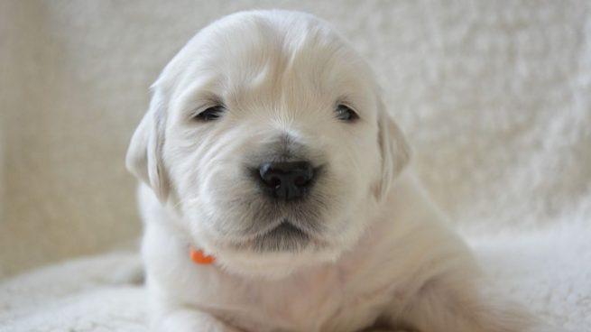 Los perros ven en blanco y negro: ¿mito o realidad?