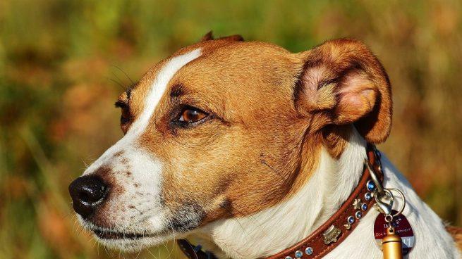 Principales enfermedades de los ojos en perros: causas y síntomas