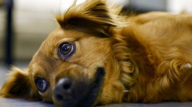 Enfermedades huesos perros