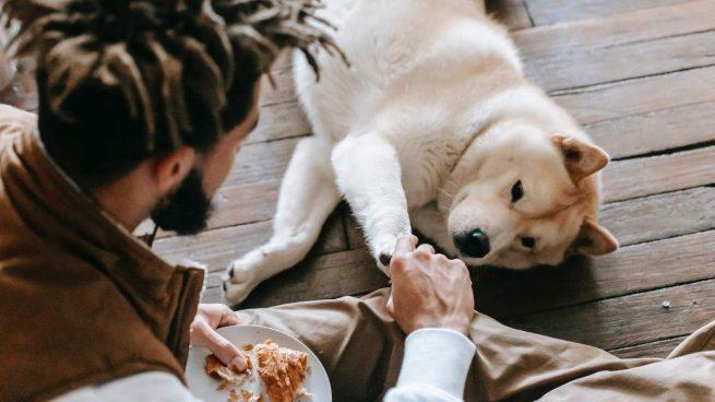 Animar perro a comer