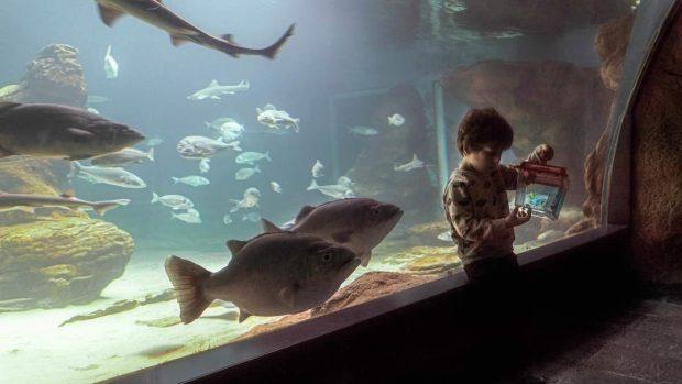 Luces acuario