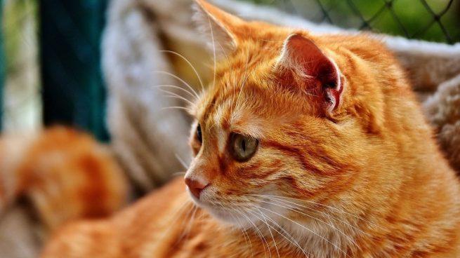 5 falsos mitos sobre los gatos que no te debes creer