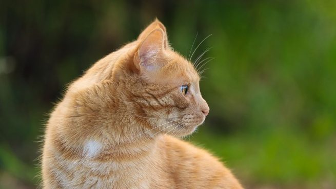 Proteger gatos calor