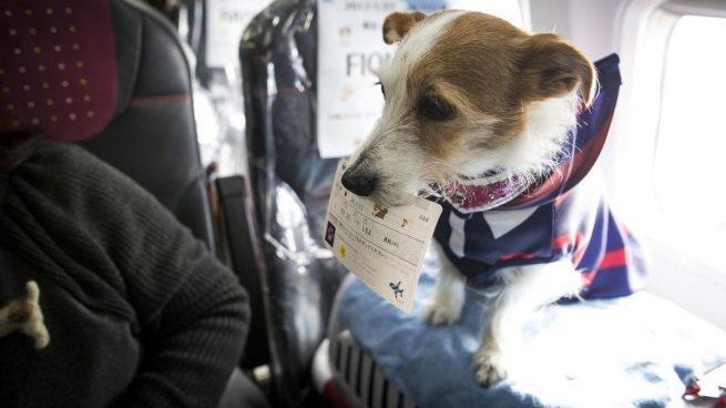 viajar en avión con mascotas