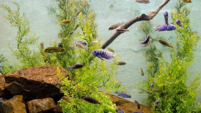 Acuario con algas