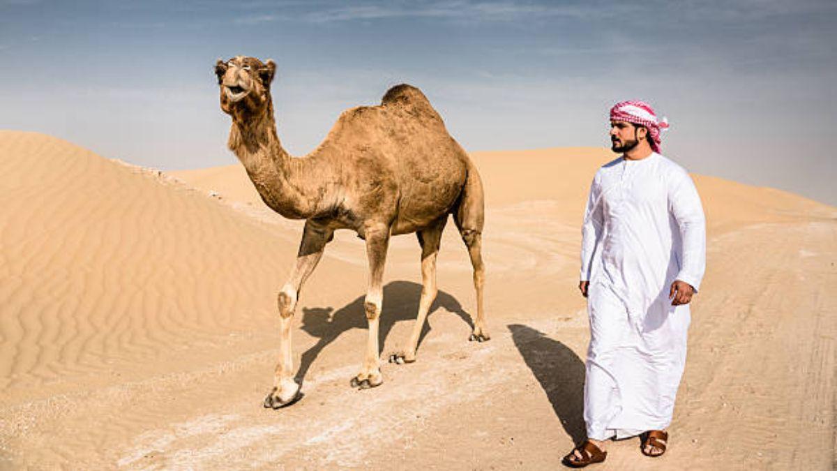Los camellos son víctimas de la contaminación por plástico