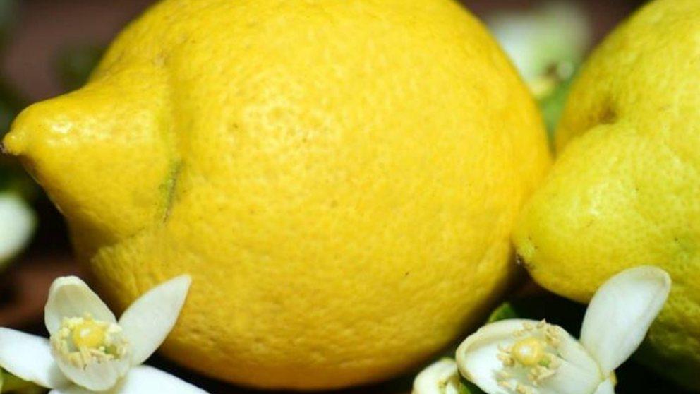 Anota y benefíciate de las virtudes del limón