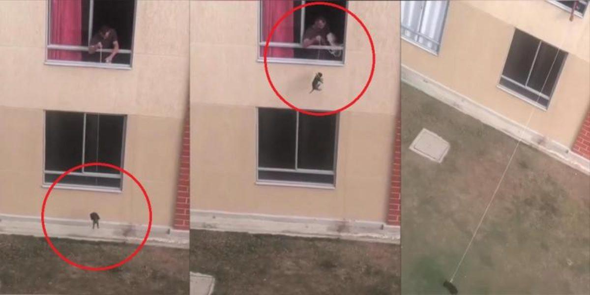 Hombre bajando a perro desde un segundo piso