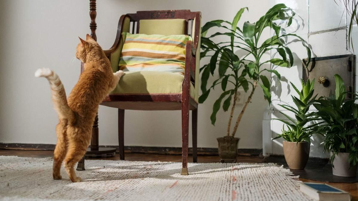 Objetos peligrosos para tu mascota