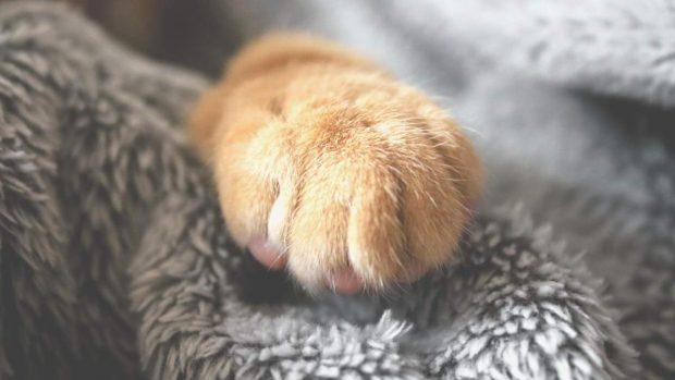 Garra del gato