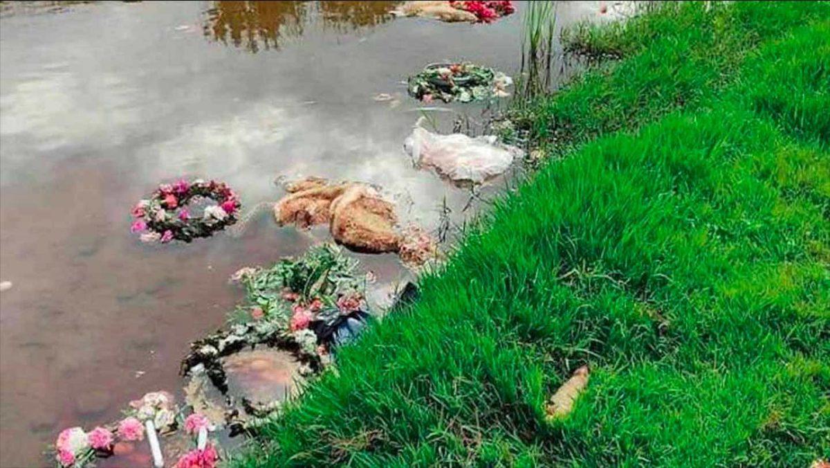 Corderos muertos a orillas del río Viar, en Cantillana (Sevilla).