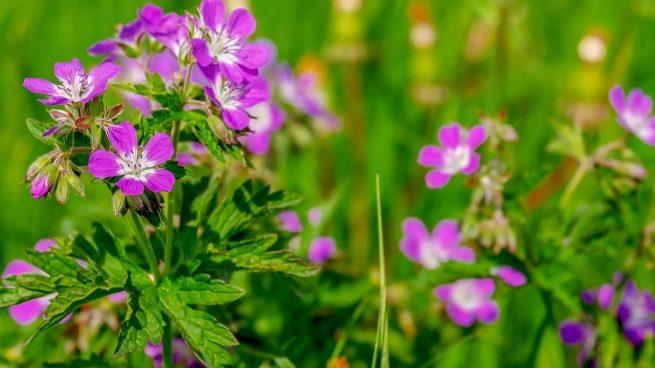Las plantas de exterior que mejor resisten el calor del verano