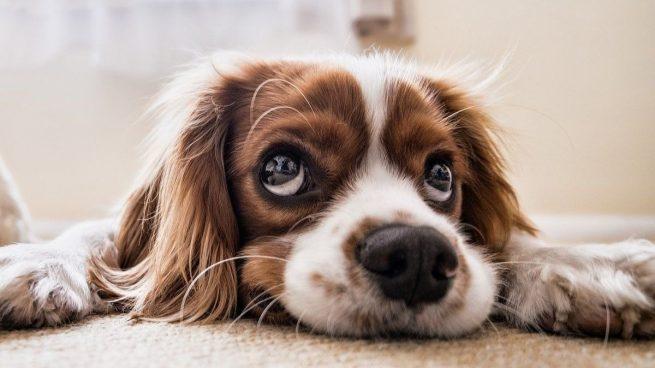Los mejores consejos sobre el cuidado de un perro para principiantes