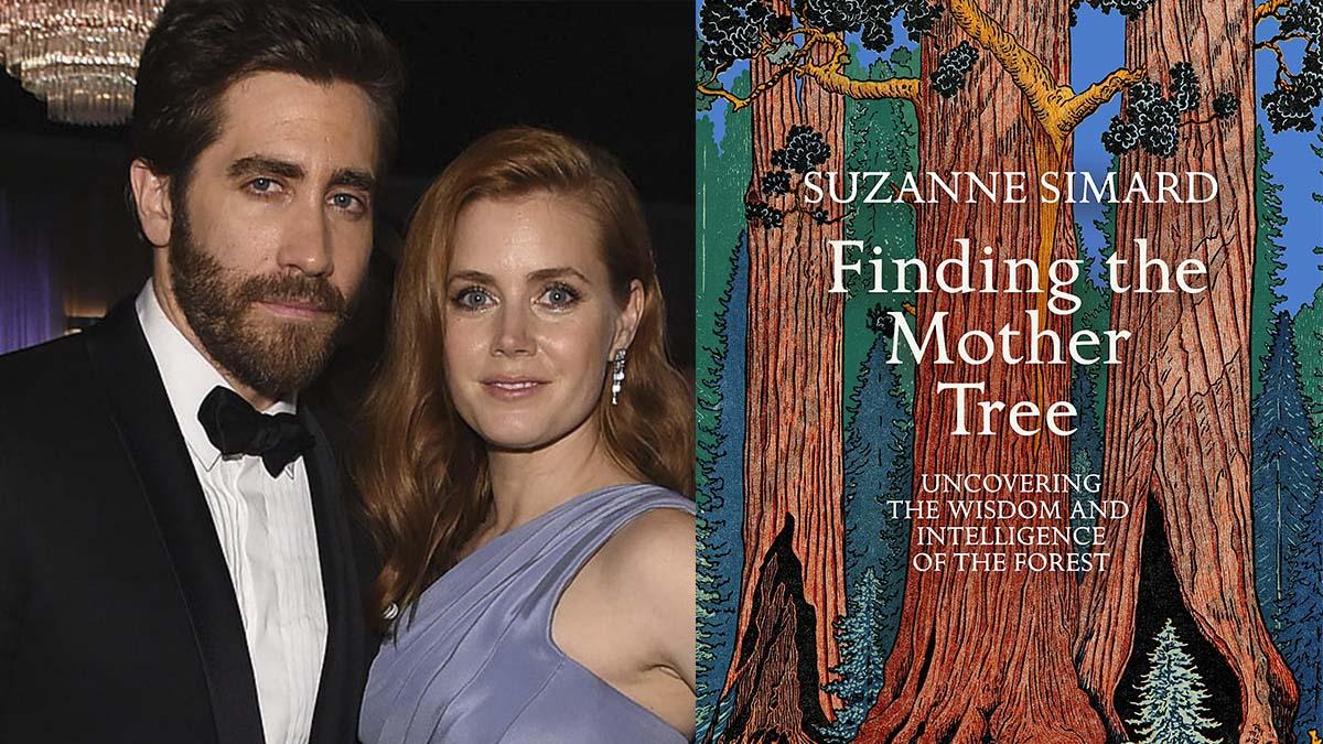 Jake Gyllenhaal y Amy Adams