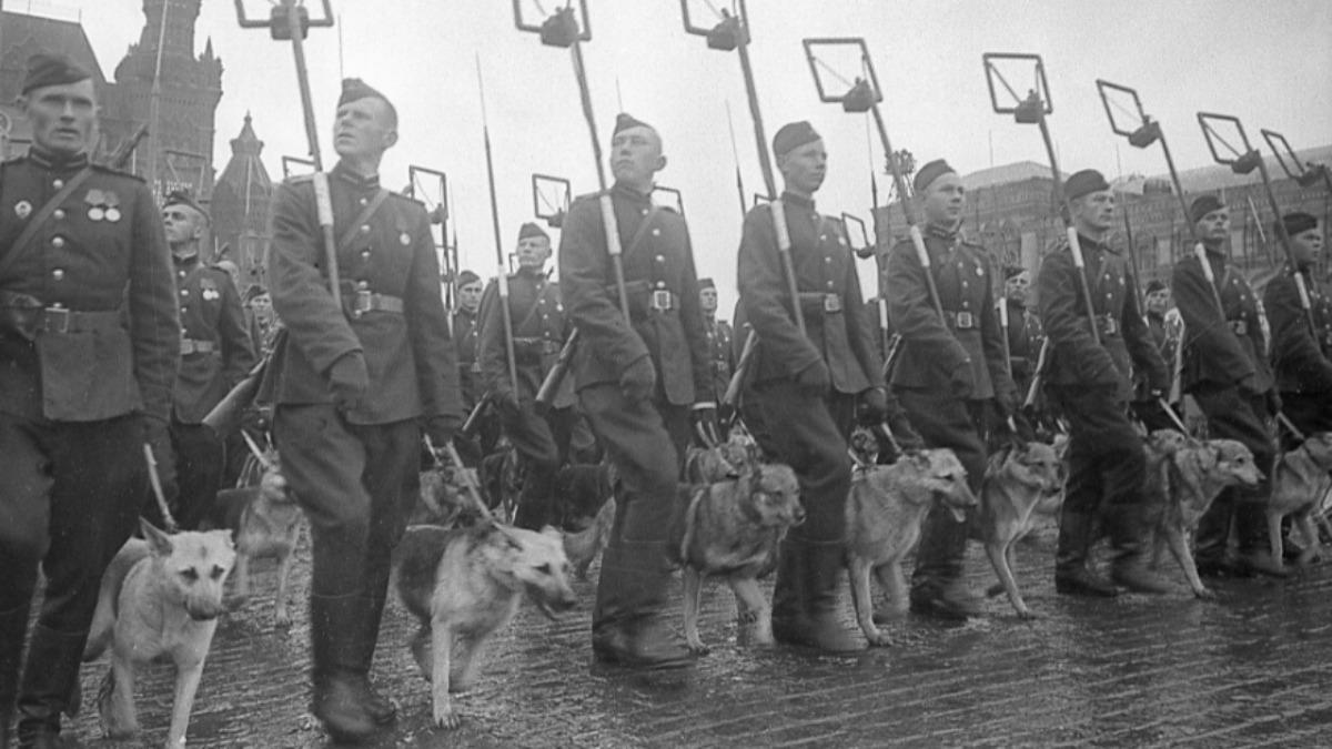 Entrenamiento de perros-kamikaze de la URSS. (Foto: Loskutov/Sputnik)